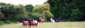 Hästarna i sommarhagen!
