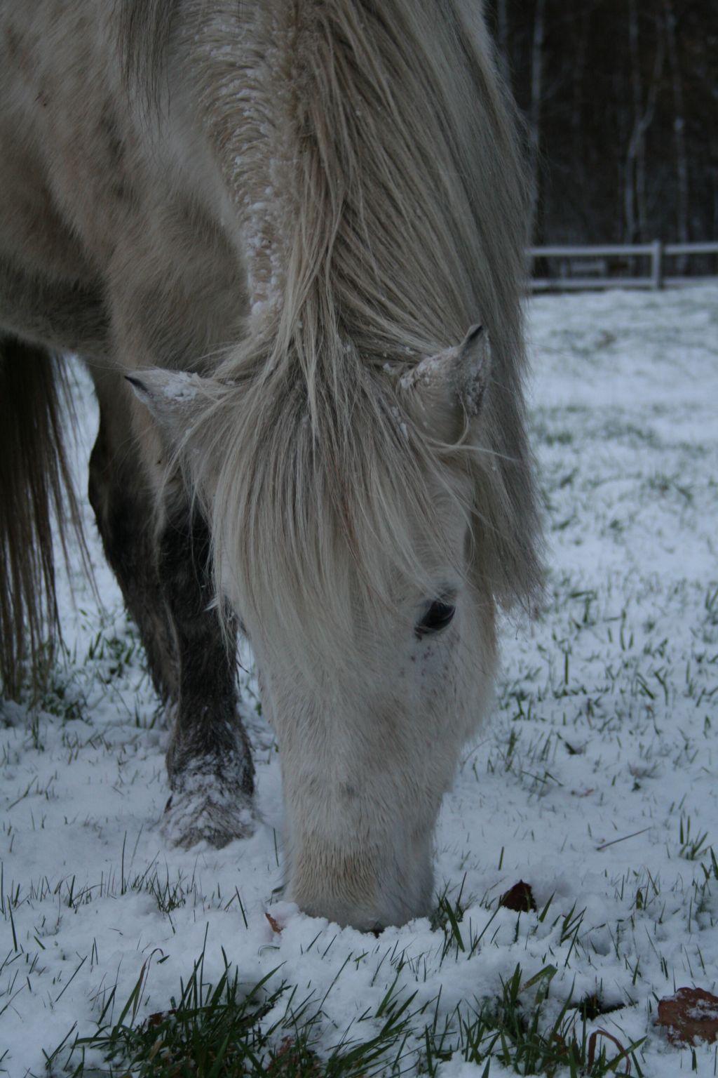 Vinterhäst