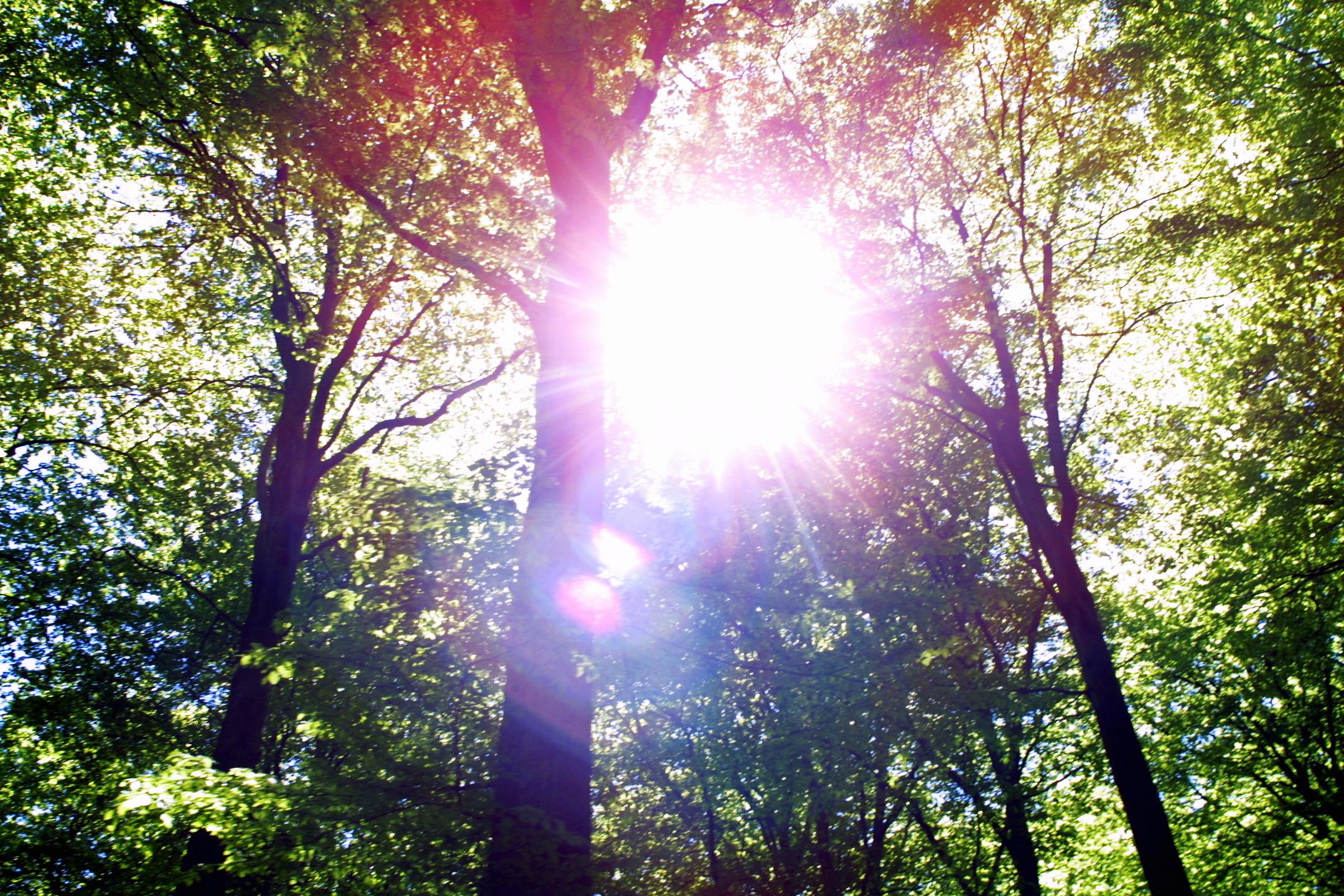 Sol och skog!
