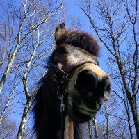 Vårhäst!
