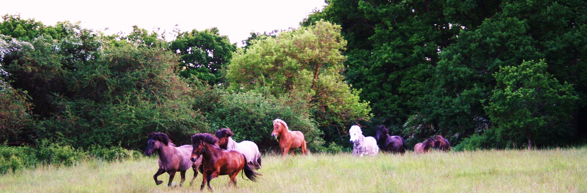 Hästar glada i hage