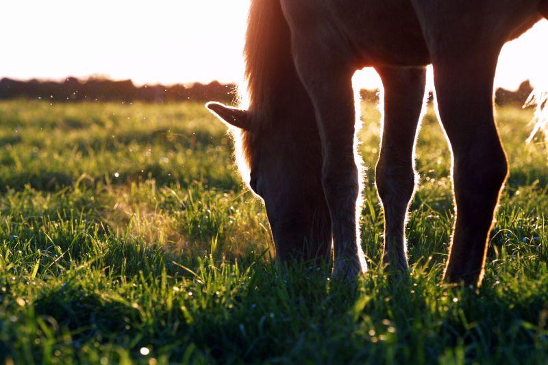 Sommar i gräset