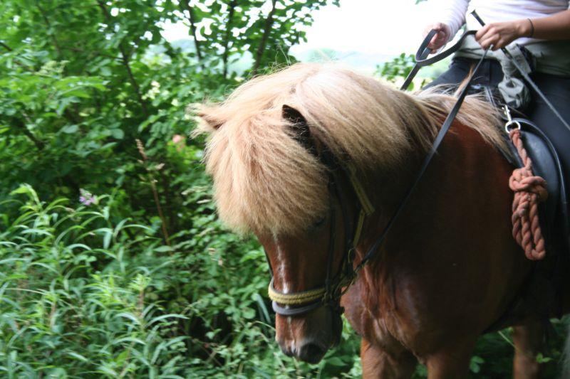 Mysig häst i skogen