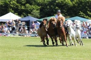 Hästarna under uppvisningen på Hästens Dag 2010.