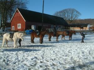 Islandshästryttare gillar vinter!