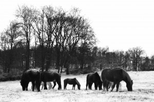 Vinterhästar