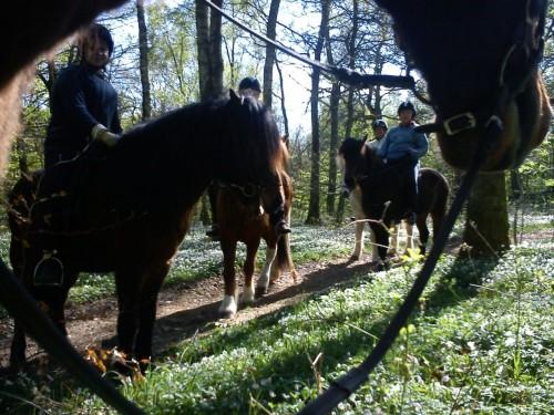 Våren intags från hästryggen
