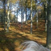 Underbara skogen!