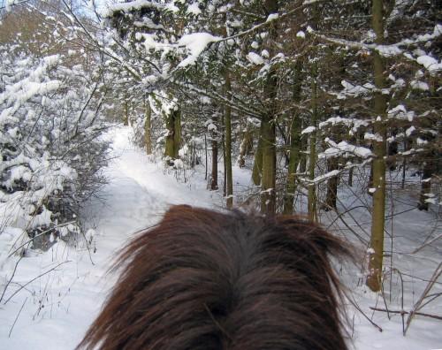 Härliga vintern från hästryggen