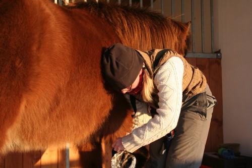 Hästpyssel i vintersol