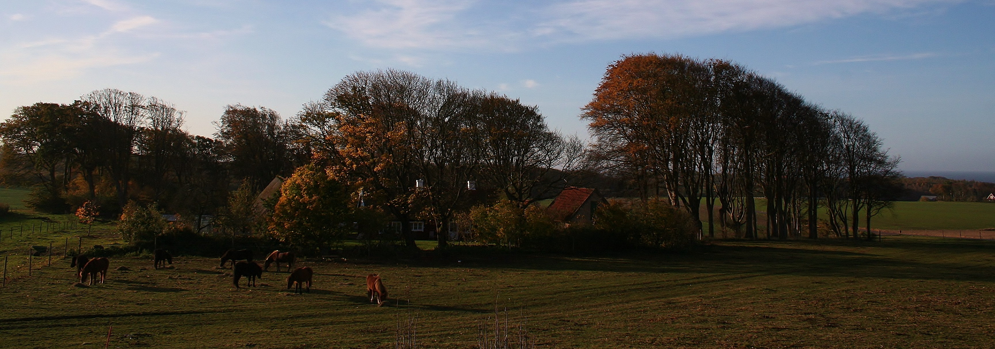 hösten 2008 049