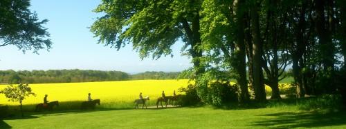 Hästar på väg ut i fina färger och miljö